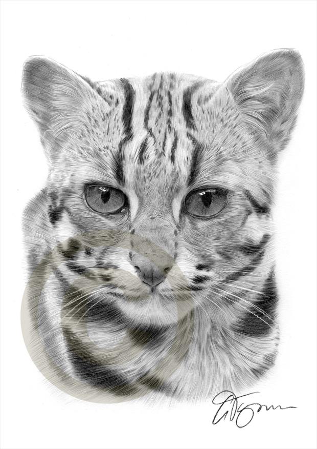 asianleopardcat01