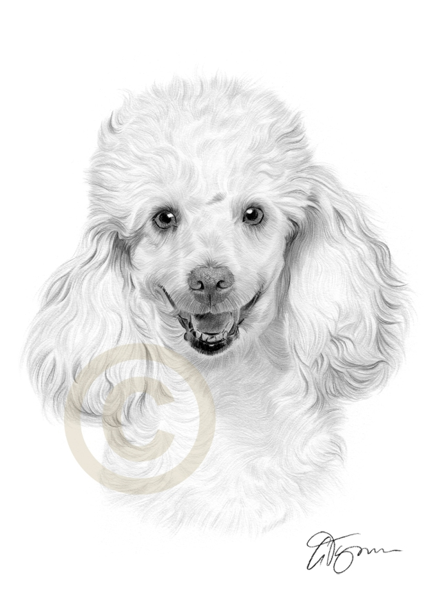 poodle-dog-animal-art