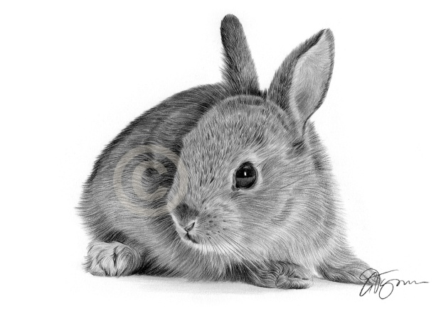 rabbit-animal-art